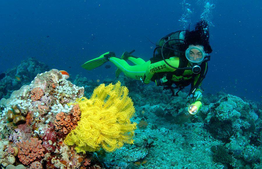 Malediven Tauchsafari Nautilus 1 Nautilus 2